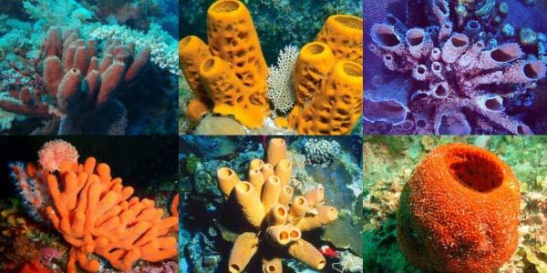 Os poríferos são animais invertebrados aquáticos que ficam fixados em um substrato.