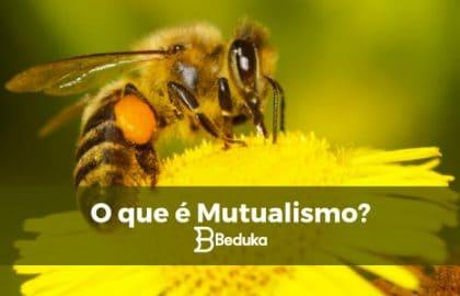 O que é Mutualismo.