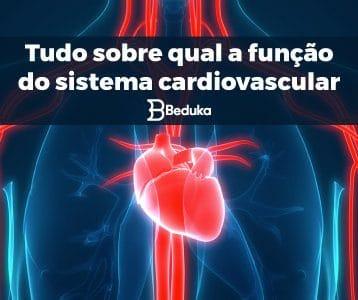 Qual a função do Sistema Cardiovascular - tudo sobre!