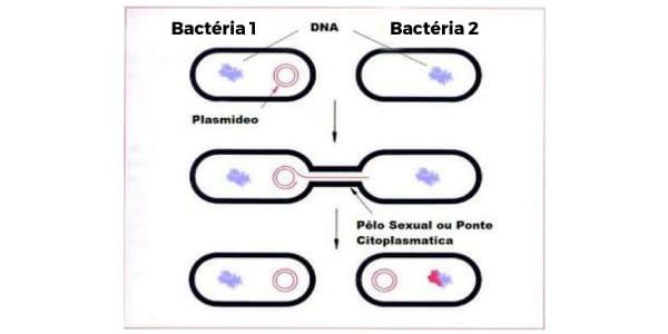 Reino-Monera-reprodução-sexuada-das-bactérias-troca-de-DNA-plasmidial-por-meio-do-canal-pili.-etapa-por-etapa