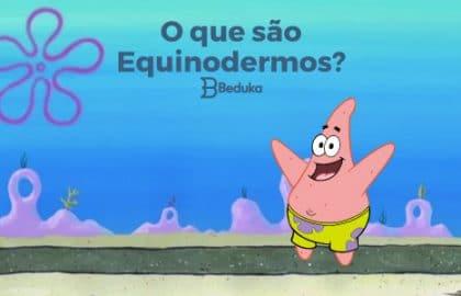 Tudo sobre o que são Equinodermos!