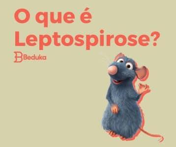 Capa da Leptospirose + imagem do rato do filme ratatouille - Tudo o que você saber sobre Leptospirose!