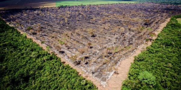 Problema Ambiental: Desmatamento