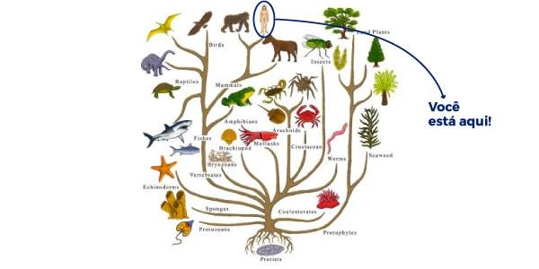 O que é Taxonomia? Definição, classificações e exemplos!