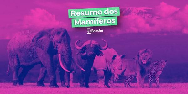 Conheça os mamíferos e suas características!