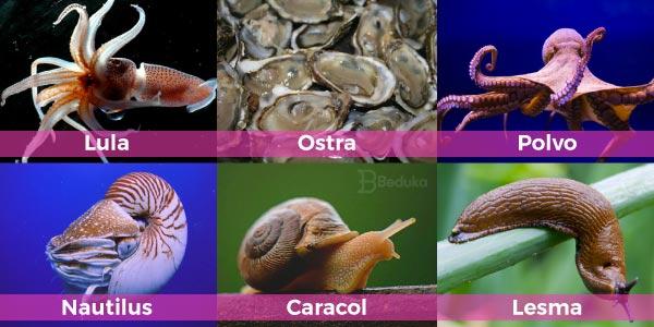 Exemplos-de-moluscos-caramujo-nautilus-polvo-sépia-lesma-e-lula