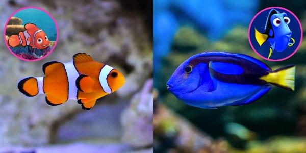 Nemo (peixe-palhaço) e Dory (cirugiã-patela)