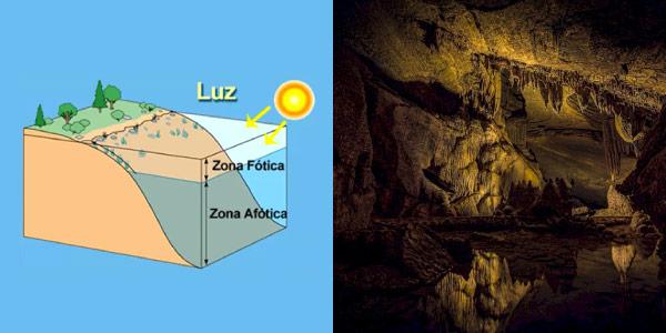 Zona Fótica e Zona Ática