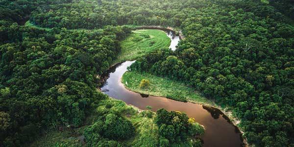 floresta-amazonica-no-brasil-e-tentantiva-de-internacionalização