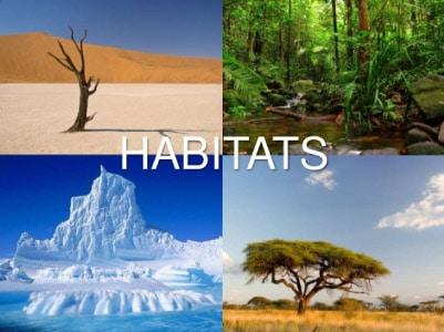habitats-dos-seres-vivos-deserto-floresta-oceano-e-savana