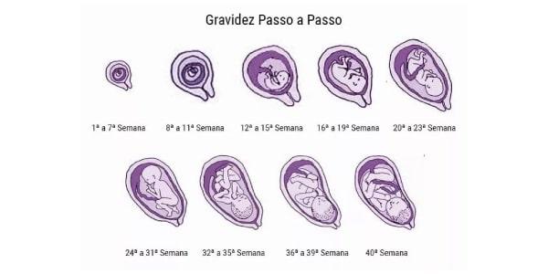 imagem-com-o-tamanho-do-bebe-nas-fases-da-gestaçao-semana-a-semana