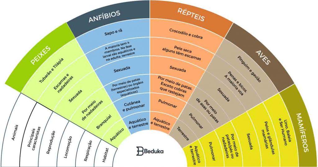 tabela-de-zoologia-comparada-e-zoologia-geral-com-os-filos-do-reino-animal-e-suas-características-dos-sistemas-digestorio-respiratorio-excretor-reprodutor-embriologia-habitat