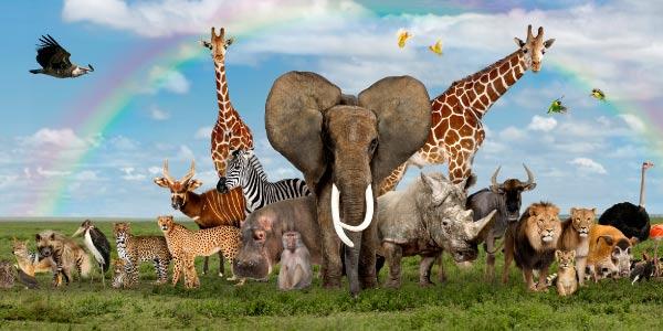 vários-animais-da-savana-africana-e-várias-espécies-do-reino-animal-1