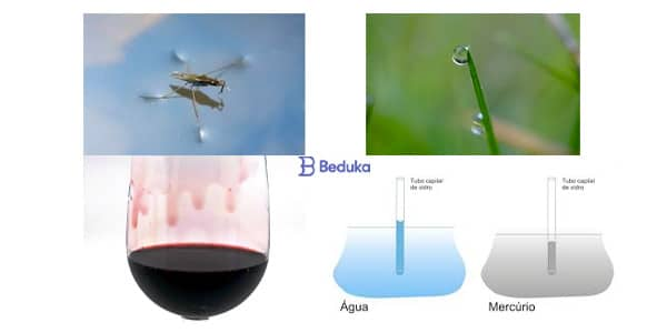 fenomenos e consequencias da tensao superficial na agua lagrimas de vinho inseto andando sobre agua forma de gota agua em tubo